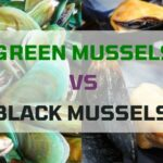 Green Mussels and Black Mussels