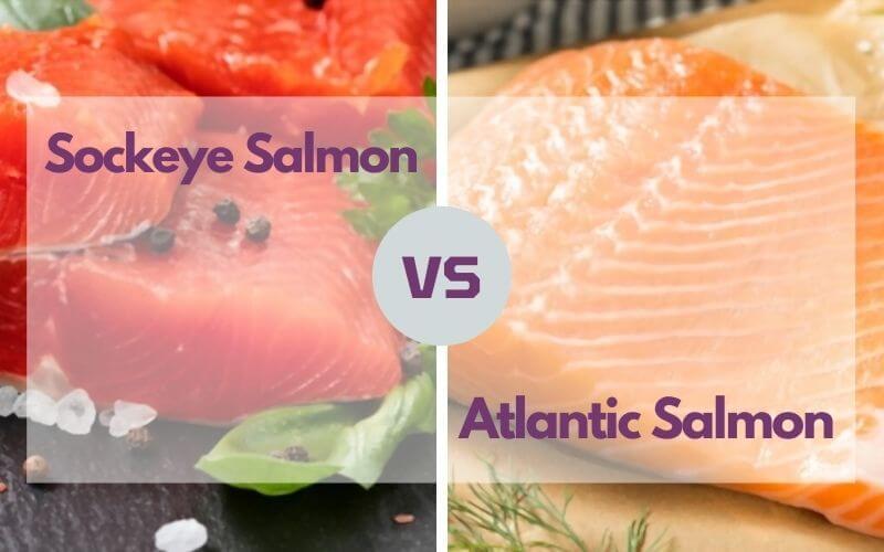 sockeye salmon vs atlantic salmon